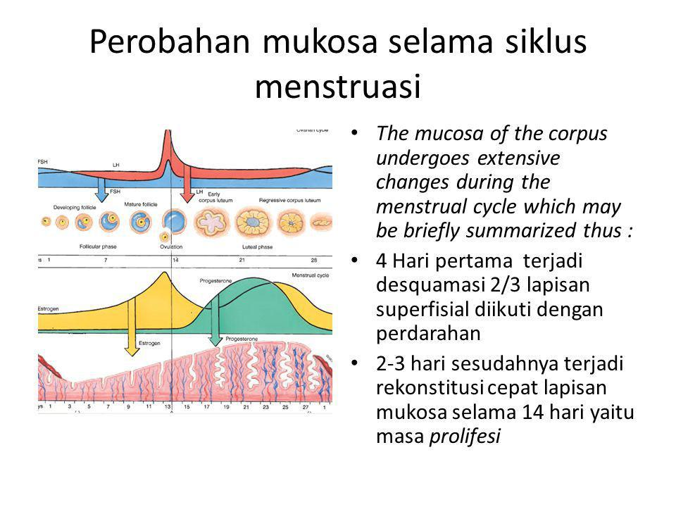 Perobahan mukosa selama siklus menstruasi