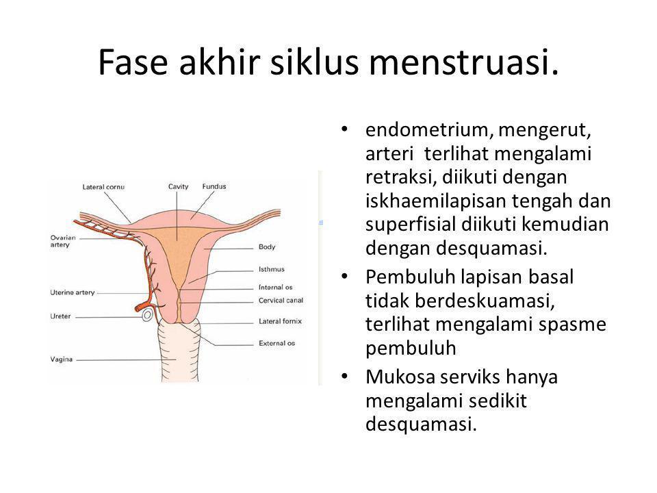 Fase akhir siklus menstruasi.