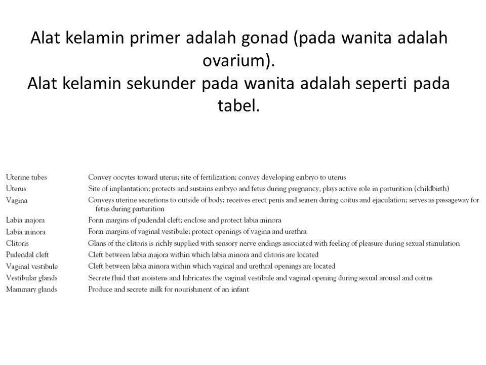Alat kelamin primer adalah gonad (pada wanita adalah ovarium)
