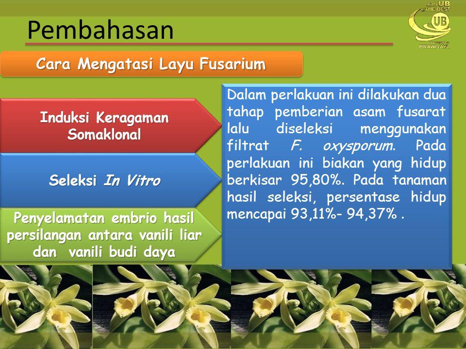 Cara Mengatasi Layu Fusarium Induksi Keragaman Somaklonal