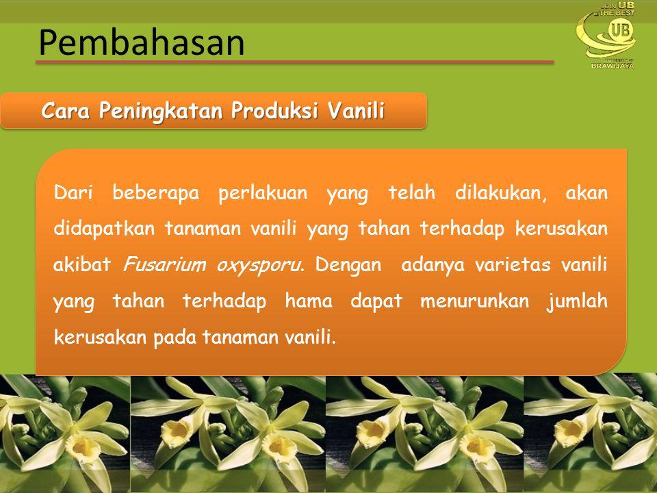 Cara Peningkatan Produksi Vanili
