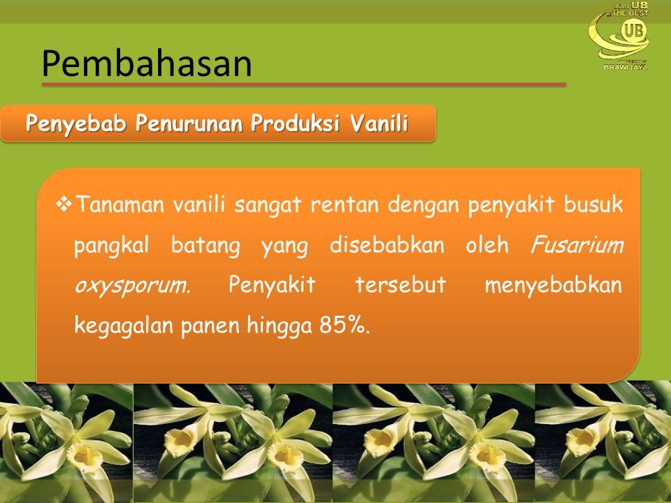 Penyebab Penurunan Produksi Vanili