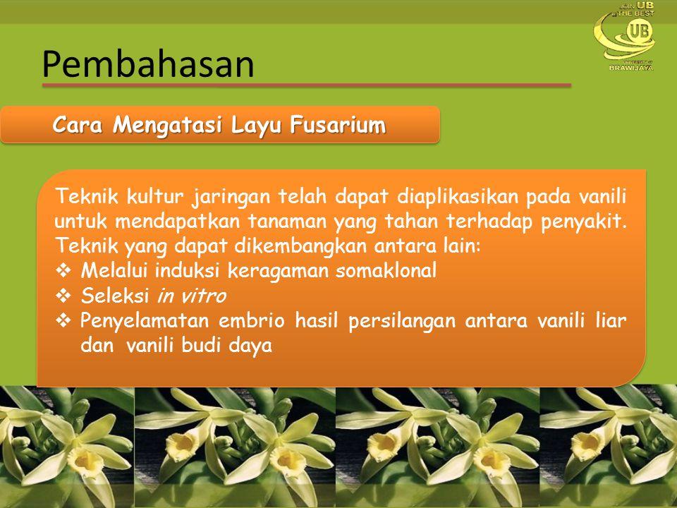 Cara Mengatasi Layu Fusarium