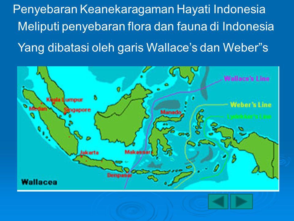 Penyebaran Keanekaragaman Hayati Indonesia