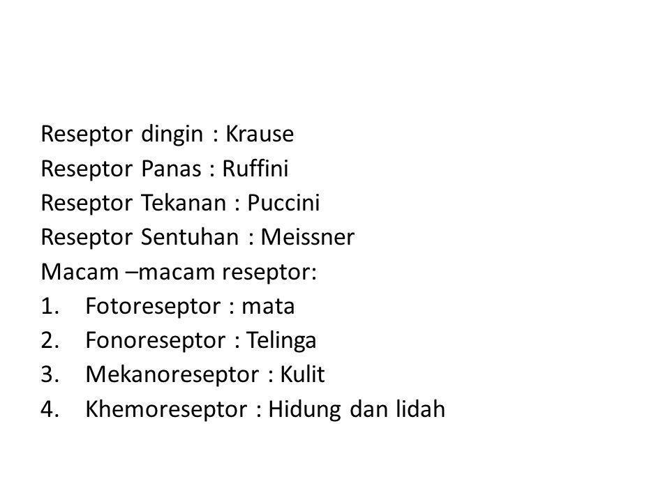 Reseptor dingin : Krause