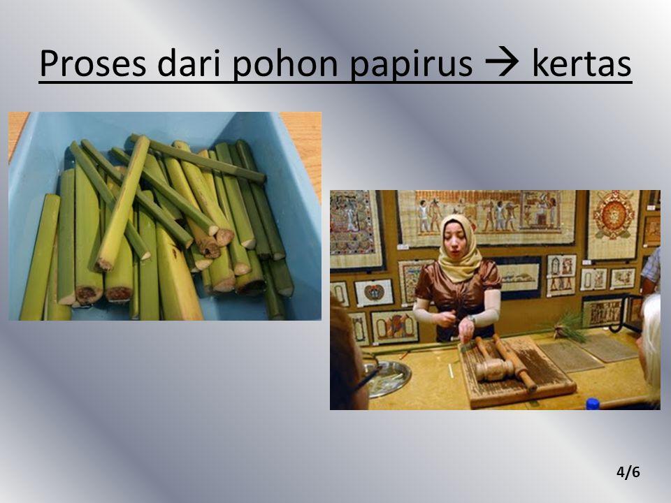 Proses dari pohon papirus  kertas