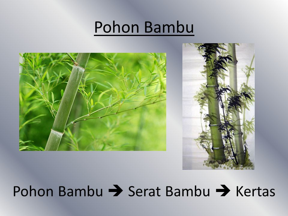 Pohon Bambu  Serat Bambu  Kertas