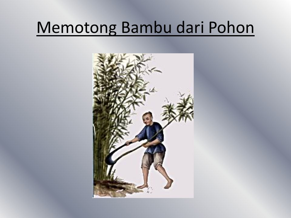 Memotong Bambu dari Pohon