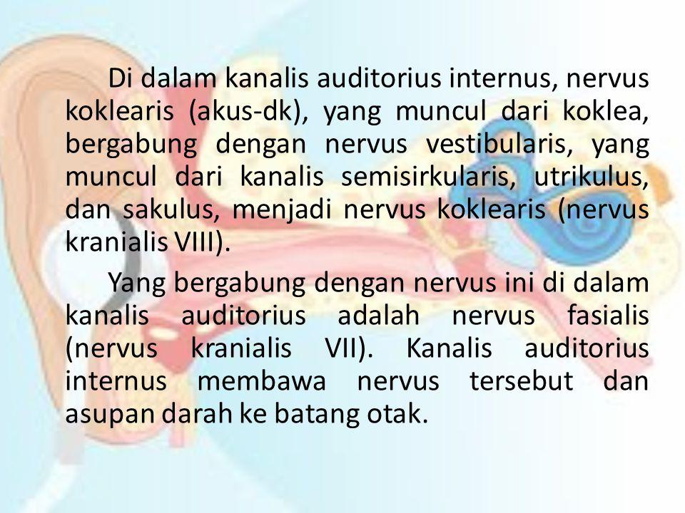 Di dalam kanalis auditorius internus, nervus koklearis (akus-dk), yang muncul dari koklea, bergabung dengan nervus vestibularis, yang muncul dari kanalis semisirkularis, utrikulus, dan sakulus, menjadi nervus koklearis (nervus kranialis VIII).