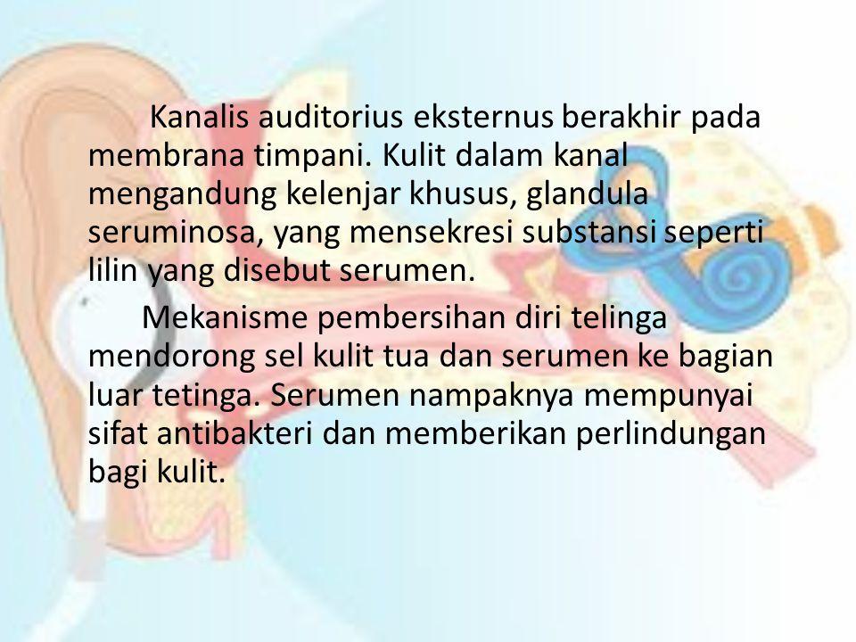 Kanalis auditorius eksternus berakhir pada membrana timpani