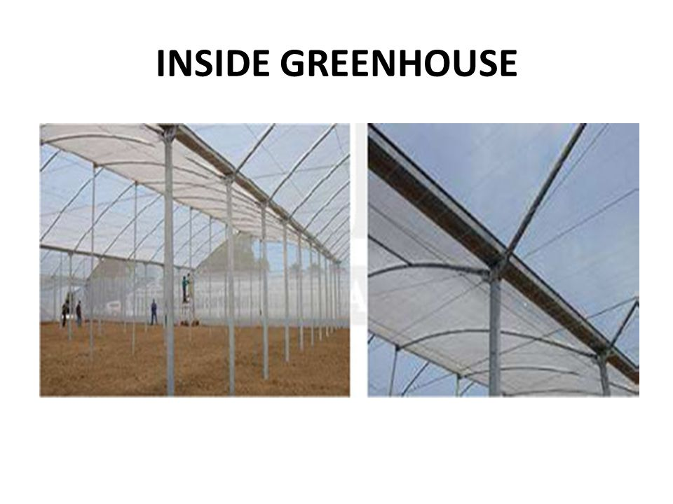 INSIDE GREENHOUSE