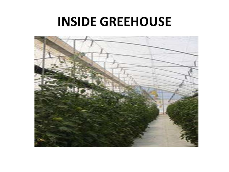 INSIDE GREEHOUSE