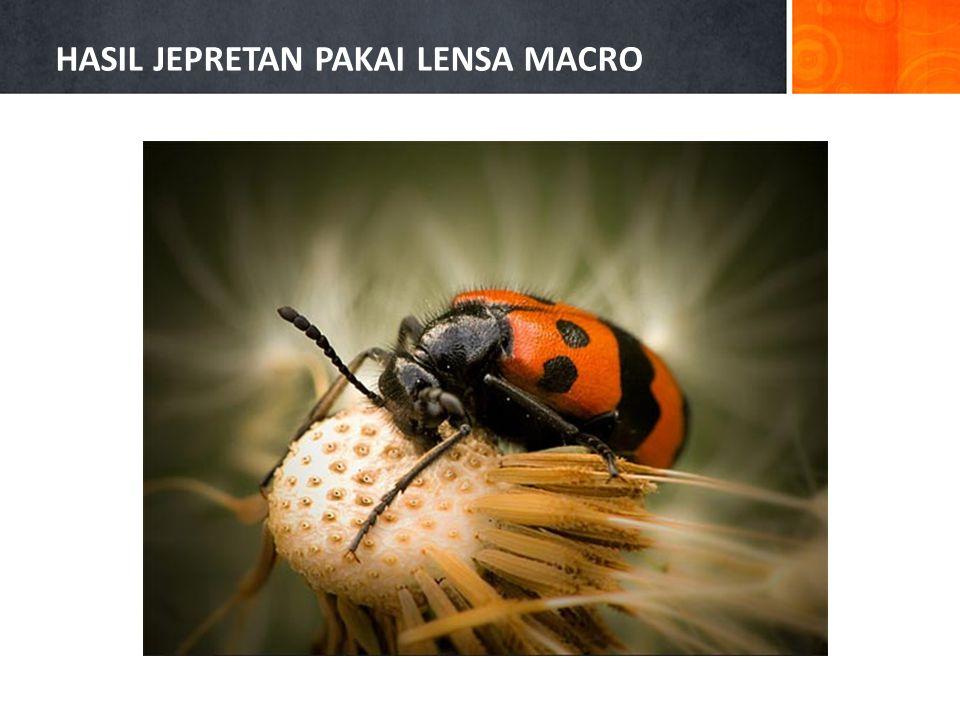 HASIL JEPRETAN PAKAI LENSA MACRO