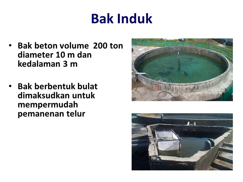 Bak Induk Bak beton volume 200 ton diameter 10 m dan kedalaman 3 m