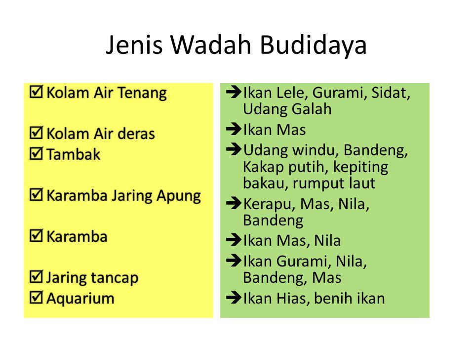 Jenis Wadah Budidaya Kolam Air Tenang Kolam Air deras Tambak