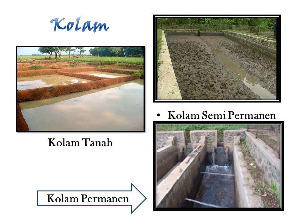 Kolam Kolam Semi Permanen Kolam Tanah Kolam Permanen