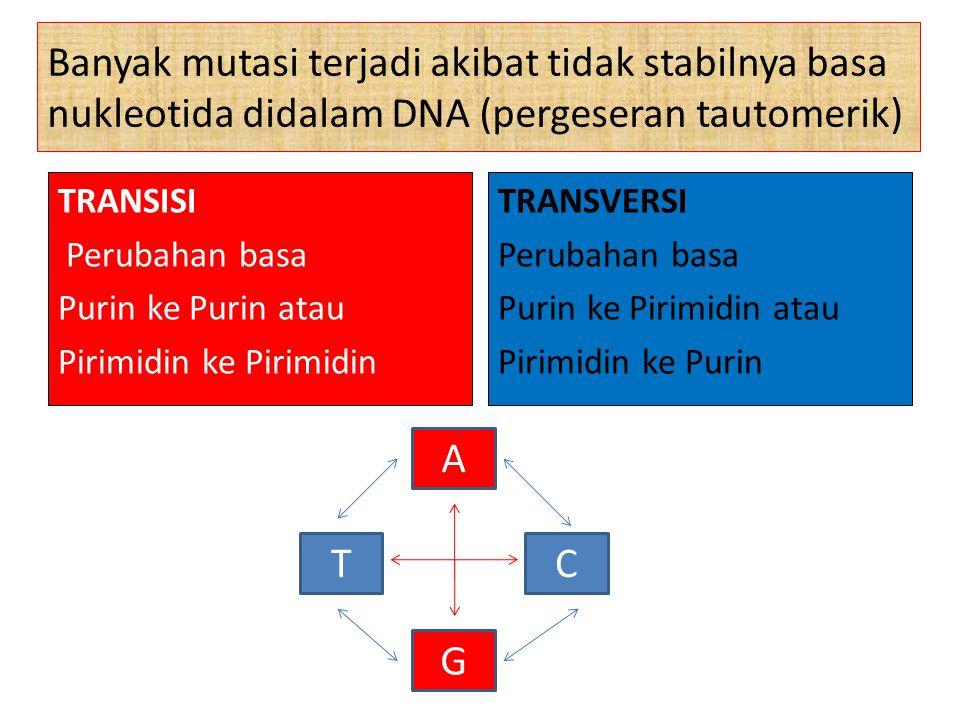 Banyak mutasi terjadi akibat tidak stabilnya basa nukleotida didalam DNA (pergeseran tautomerik)