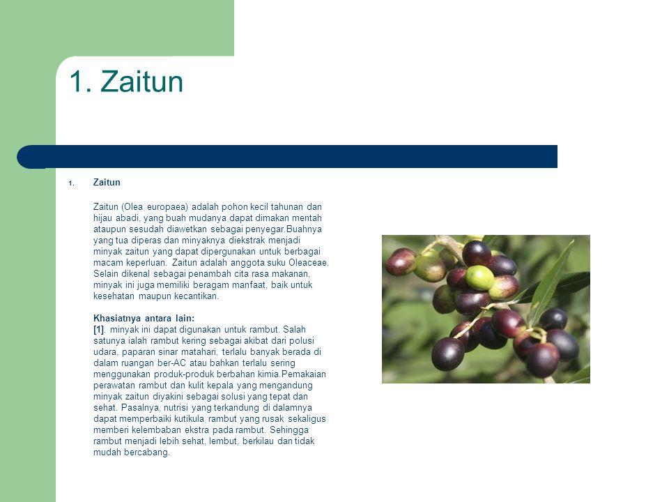 1. Zaitun Zaitun.