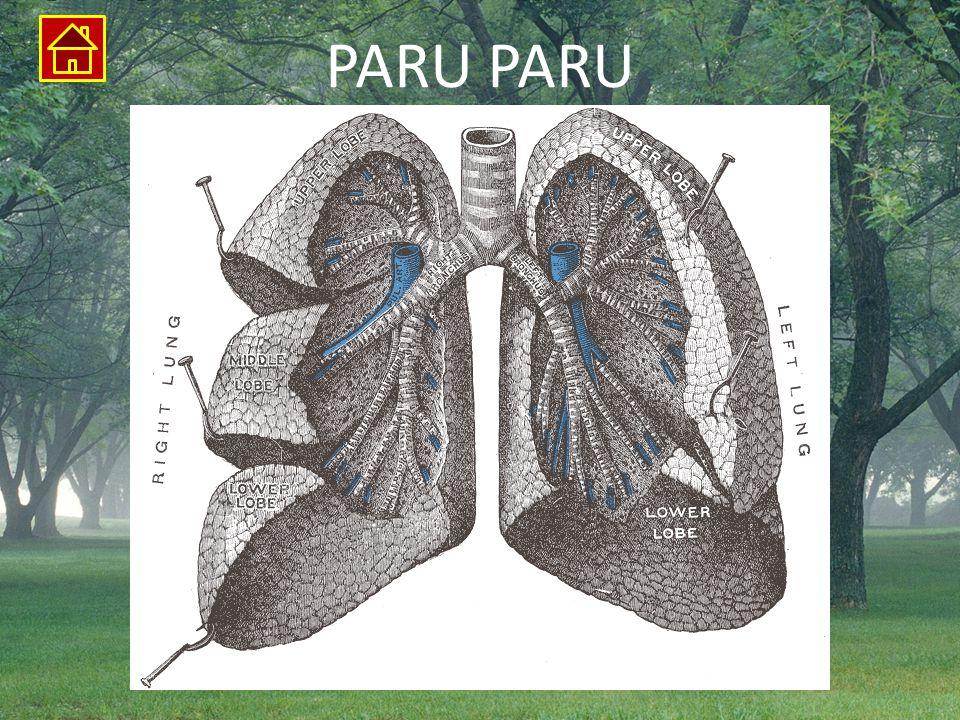 PARU PARU