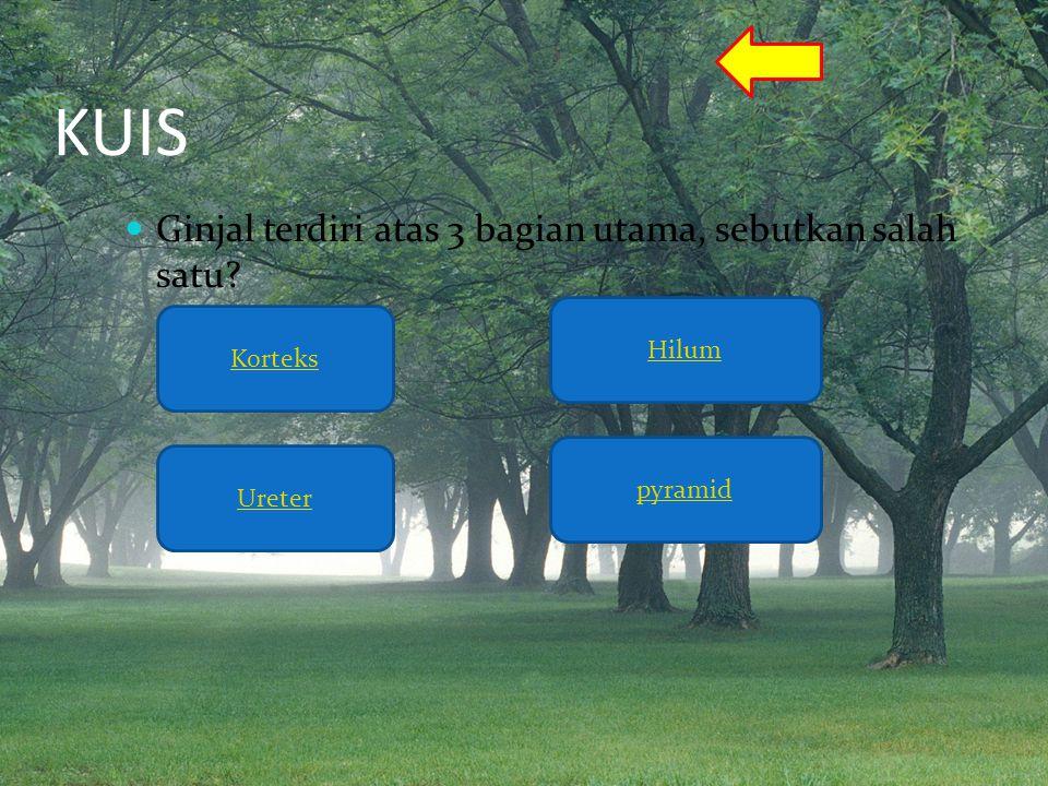 KUIS Ginjal terdiri atas 3 bagian utama, sebutkan salah satu Hilum