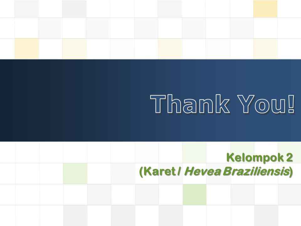 Thank You! Kelompok 2 (Karet / Hevea Braziliensis)