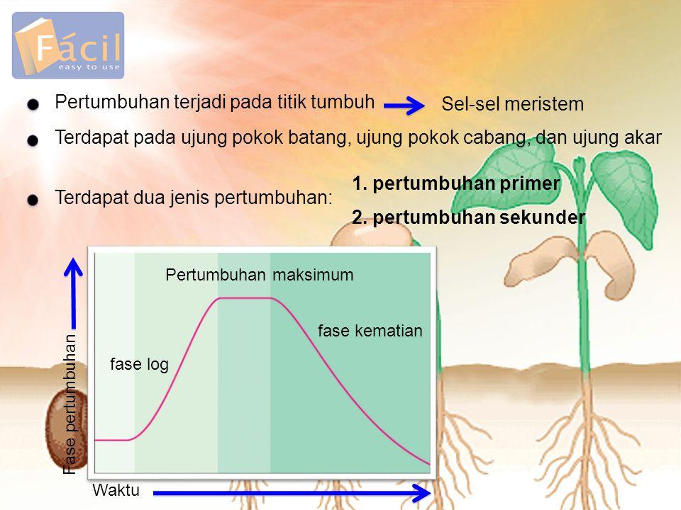 Pertumbuhan terjadi pada titik tumbuh Sel-sel meristem