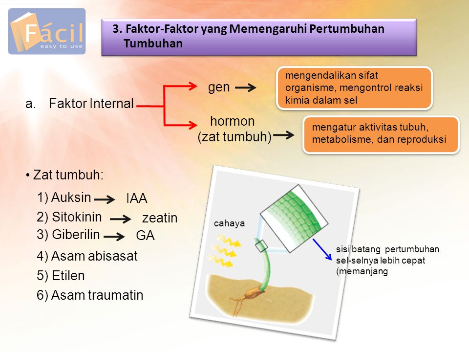 3. Faktor-Faktor yang Memengaruhi Pertumbuhan Tumbuhan