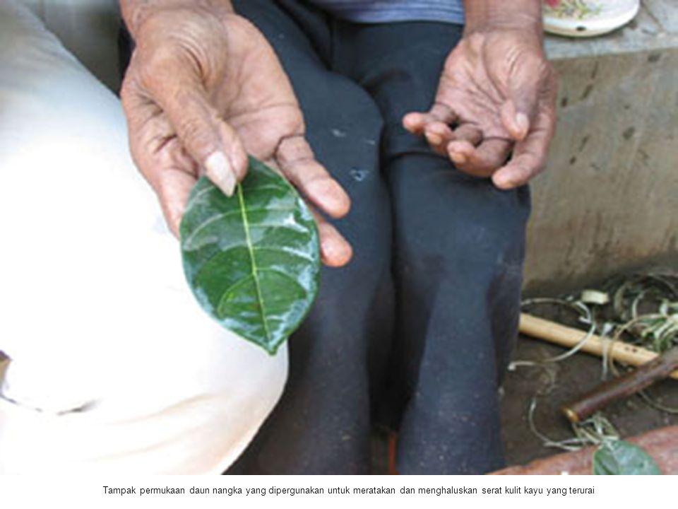 Tampak permukaan daun nangka yang dipergunakan untuk meratakan dan menghaluskan serat kulit kayu yang terurai