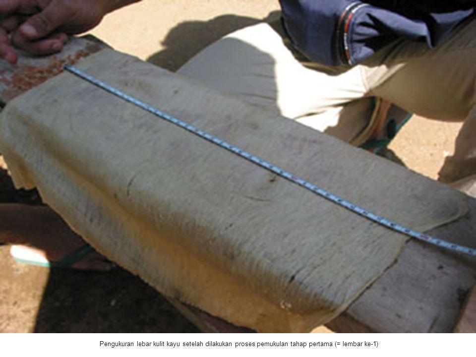 Pengukuran lebar kulit kayu setelah dilakukan proses pemukulan tahap pertama (= lembar ke-1)