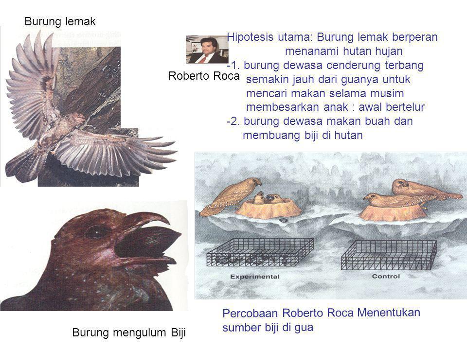 Burung lemak Hipotesis utama: Burung lemak berperan. menanami hutan hujan. -1. burung dewasa cenderung terbang.