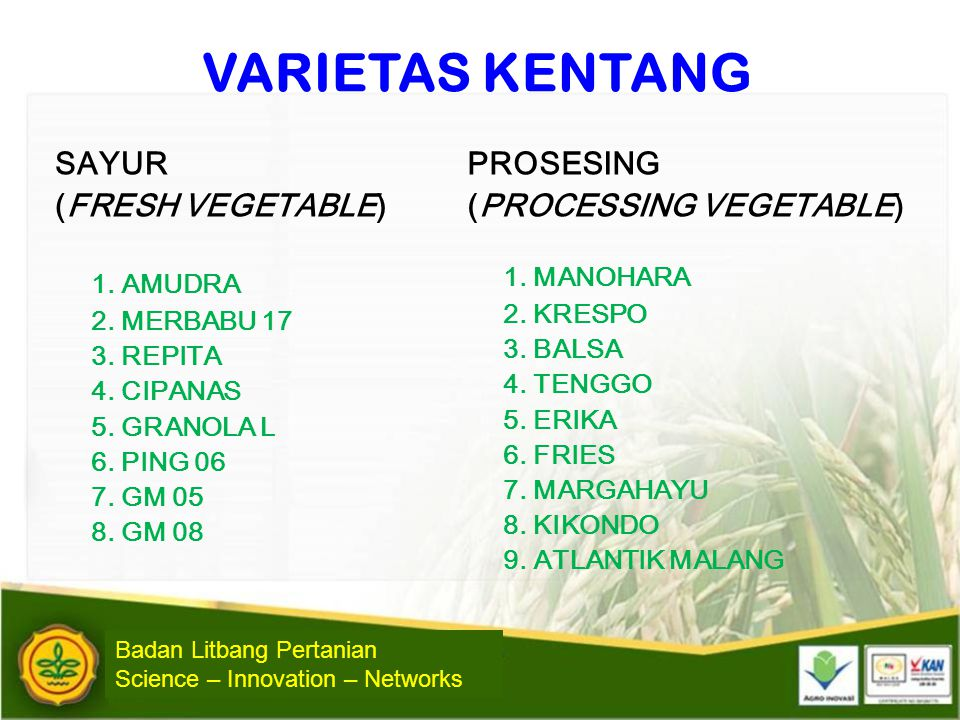 VARIETAS KENTANG SAYUR (FRESH VEGETABLE) 1. AMUDRA PROSESING