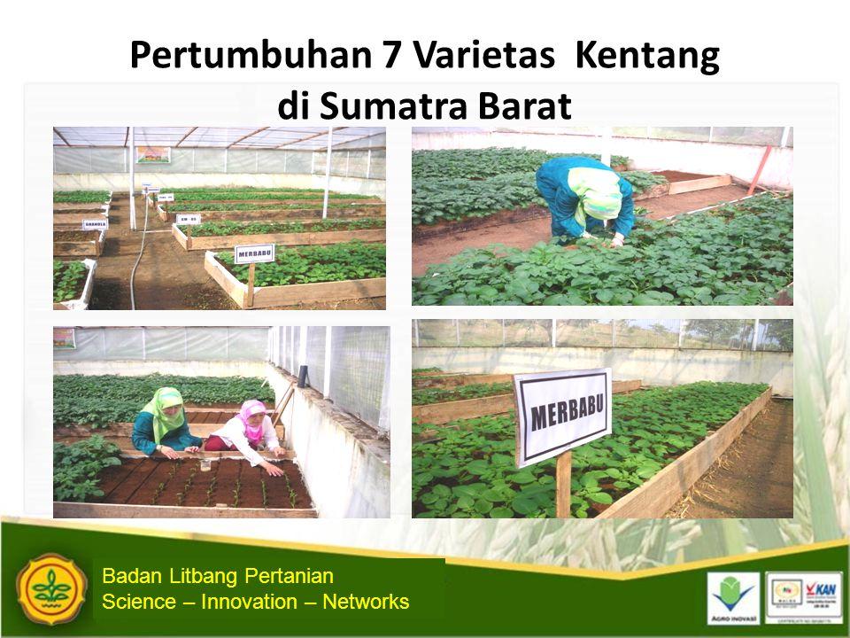 Pertumbuhan 7 Varietas Kentang di Sumatra Barat