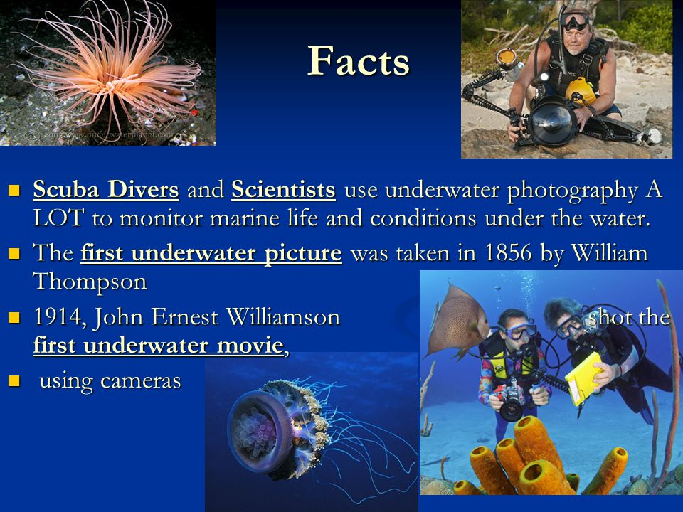 Facts Scuba Divers and Scientists use underwater photography A LOT to monitor marine life and conditions under the water.