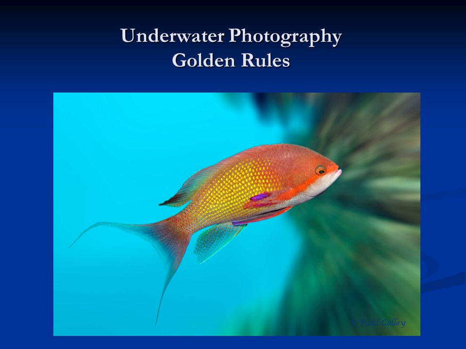 Underwater Photography Golden Rules