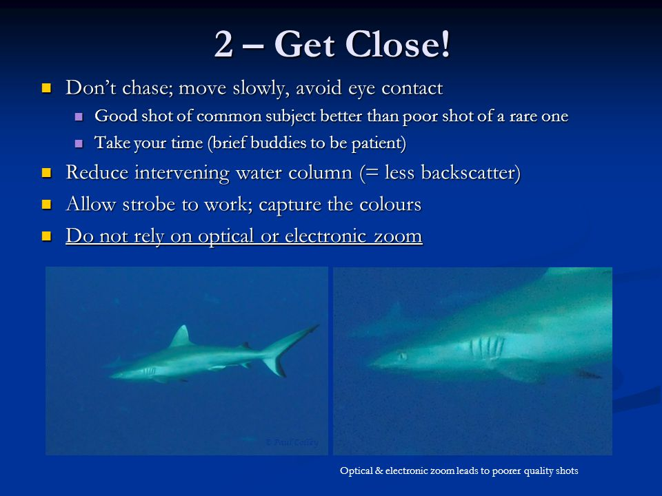 2 – Get Close! Don't chase; move slowly, avoid eye contact