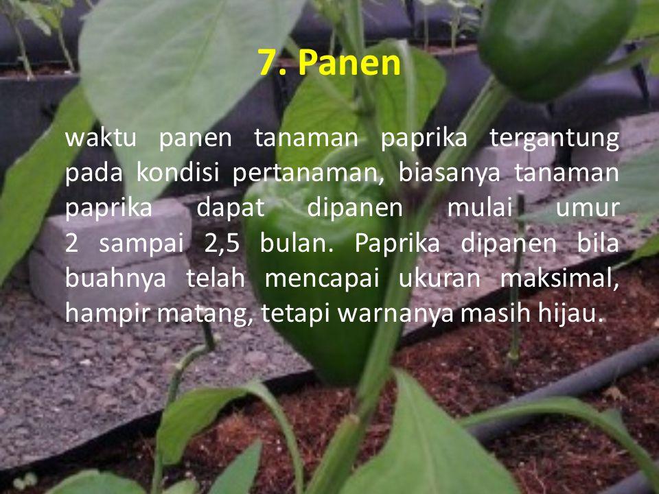 7. Panen