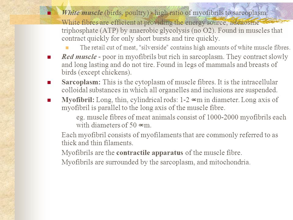Myofibrils are the contractile apparatus of the muscle fibre.