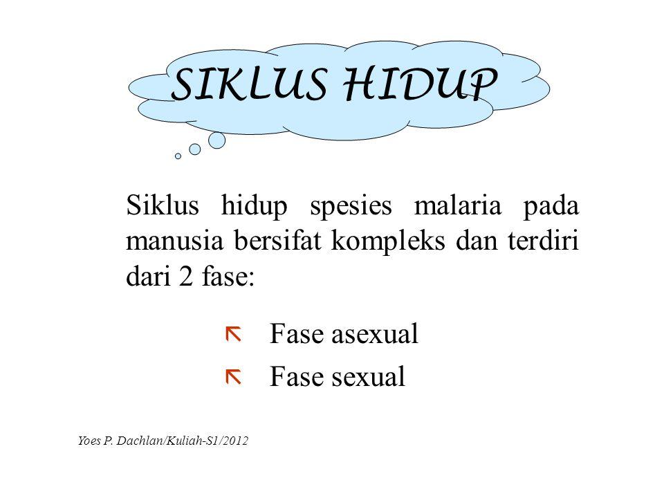 SIKLUS HIDUP Siklus hidup spesies malaria pada manusia bersifat kompleks dan terdiri dari 2 fase: Fase asexual.