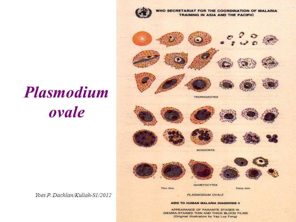 Plasmodium ovale Yoes P. Dachlan/Kuliah-S1/2012