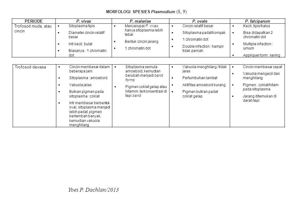 MORFOLOGI SPESIES Plasmodium (8, 9)