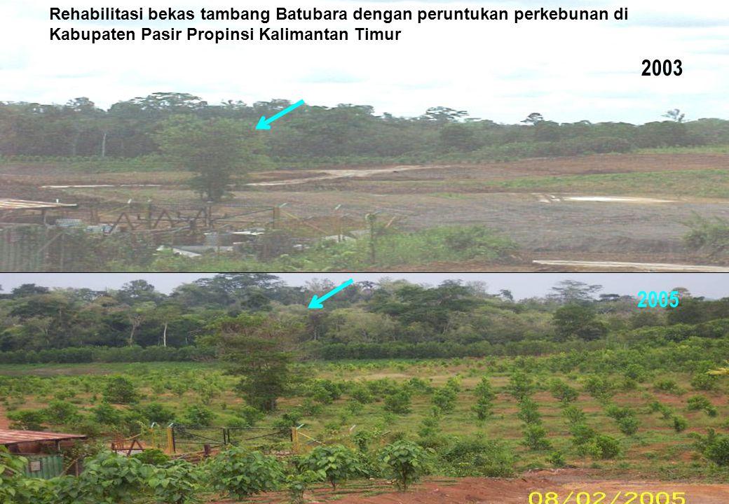 Rehabilitasi bekas tambang Batubara dengan peruntukan perkebunan di Kabupaten Pasir Propinsi Kalimantan Timur