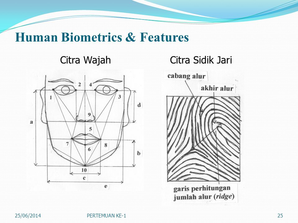 Human Biometrics & Features