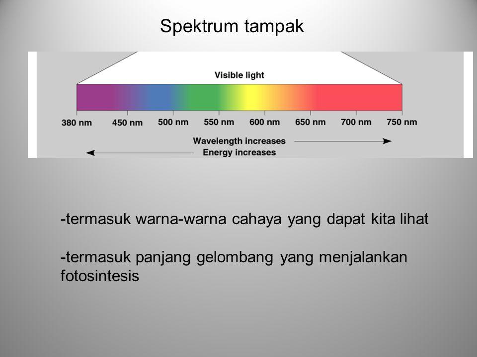Spektrum tampak -termasuk warna-warna cahaya yang dapat kita lihat