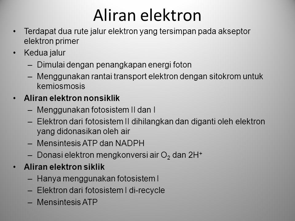 Aliran elektron Terdapat dua rute jalur elektron yang tersimpan pada akseptor elektron primer. Kedua jalur.