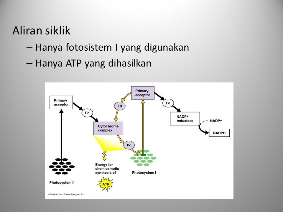 Aliran siklik Hanya fotosistem I yang digunakan