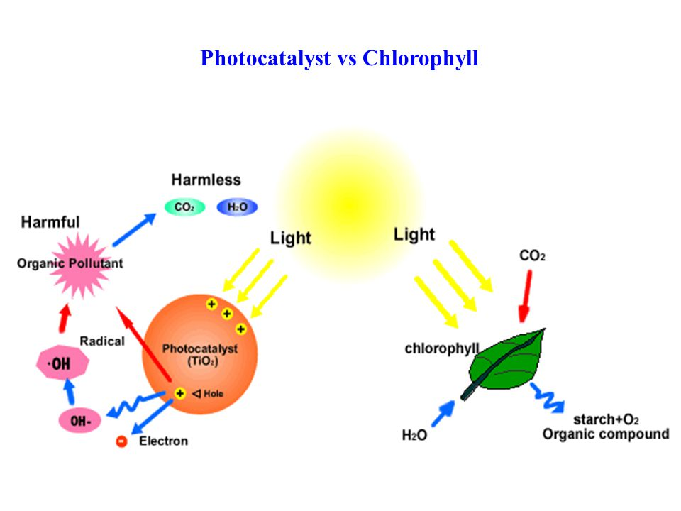 Photocatalyst vs Chlorophyll