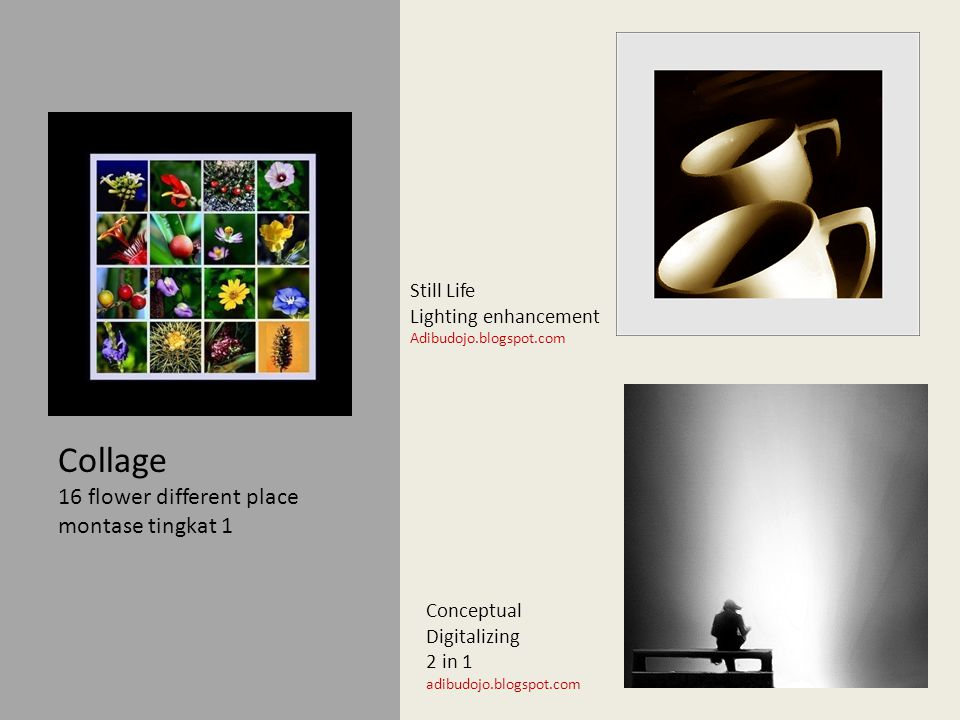Collage 16 flower different place montase tingkat 1 Still Life