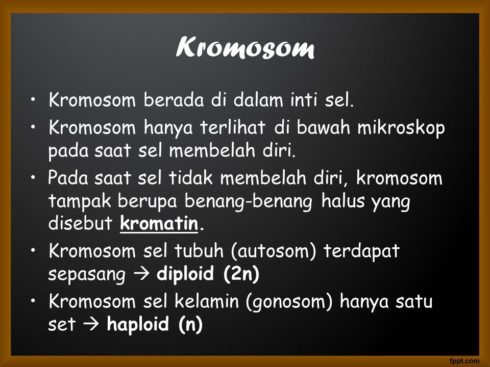 Kromosom Kromosom berada di dalam inti sel.