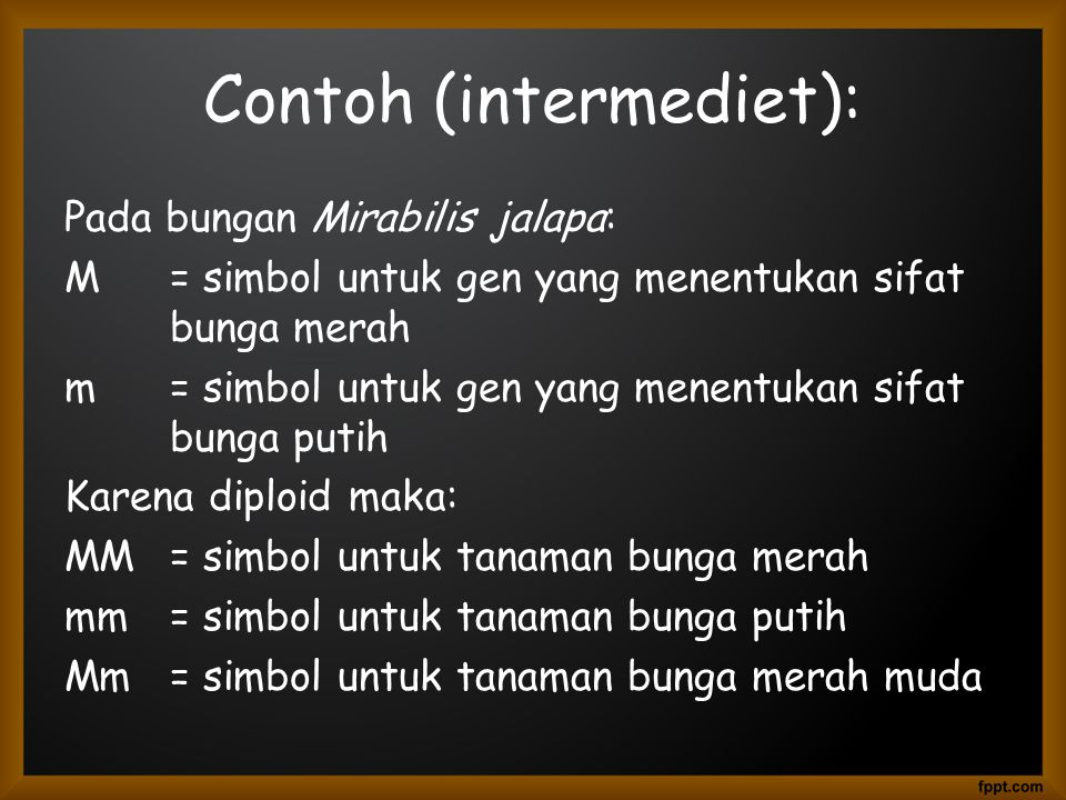 Contoh (intermediet):