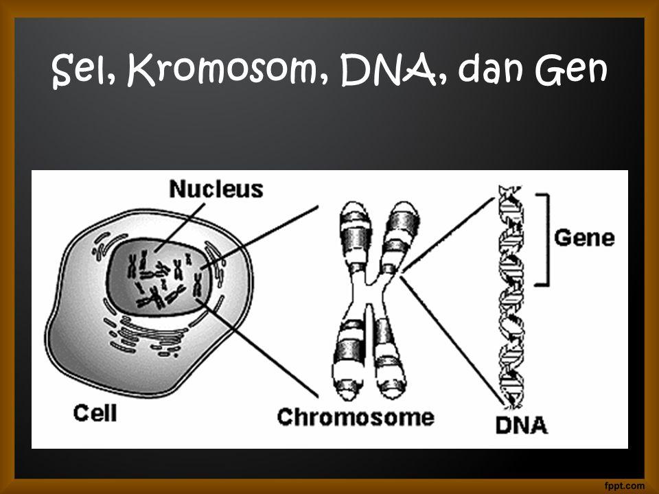 Sel, Kromosom, DNA, dan Gen
